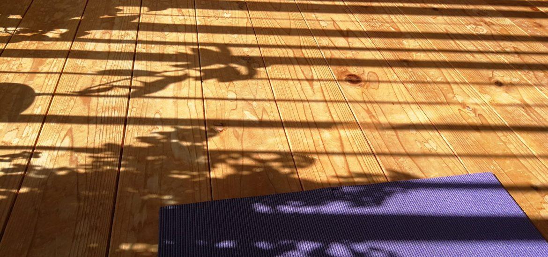 写真は朝の楽の森。プチ瞑想の会は晩に開催します。